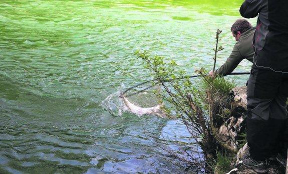 pesca salmón Cares